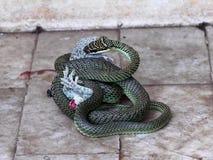Gecko u. Schlange lizenzfreie stockfotos