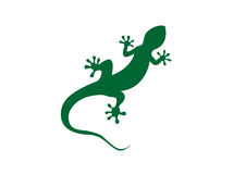 Gecko vector illustration Stock Images