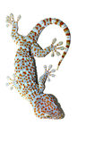 Gecko on wall Stock Images