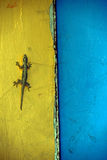 Gecko on a wall Royalty Free Stock Photography
