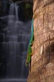 Gecko at waterfalls Stock Photo