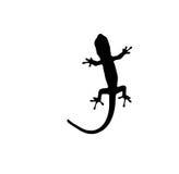 Gecko white Royalty Free Stock Photo