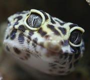 geckomakro Arkivfoton