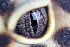 Geckos eye. Macro shot of leopard geckos eye Royalty Free Stock Photography