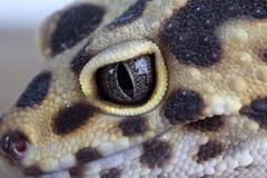 Geckos face. Macro shot of leopard geckos face Royalty Free Stock Photo