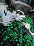 Geckos. Greckos outdoor Royalty Free Stock Image