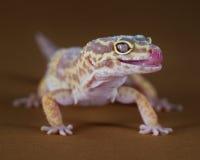 Geckostilen Arkivbilder
