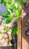 Geco em um trilho de madeira Foto de Stock Royalty Free
