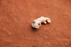 Geco fatto a mano sveglio sulla parete del rossetto Immagine Stock Libera da Diritti