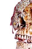 Geco sul cranio Immagini Stock