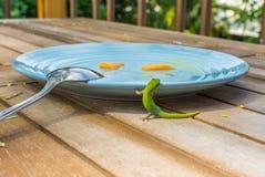 Geco verde em uma placa do café da manhã Fotos de Stock Royalty Free