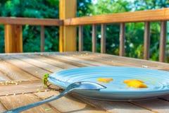 Geco verde em uma placa do café da manhã Imagens de Stock