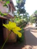 Geconcentreerde bloem Stock Fotografie