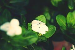 Geconcentreerde bloem Royalty-vrije Stock Afbeelding