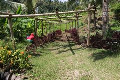 Geconstrueerde bamboestructuur voor installatie het beklimmen Stock Afbeeldingen