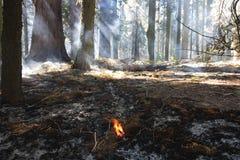 Gecontroleerde brandwond stock afbeelding