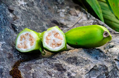 Gecultiveerd bananascultivated bananen bij doi luang chiang dao Royalty-vrije Stock Afbeeldingen