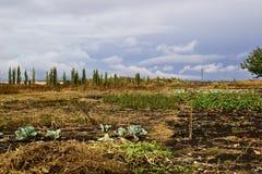 Gecultiveerd gebied tijdens het oogsten in het de herfstseizoen Stock Afbeelding