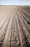 Gecultiveerd land in de Lente Stock Foto