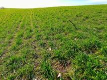 Gecultiveerd land en jong groen de lentegras bij het kronkelen van bergachtig terrein stock afbeeldingen