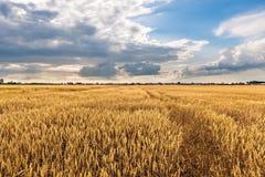 Gecultiveerd land met bewolkte hemel Stock Fotografie