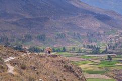Gecultiveerd landschap, Colca-canion Stock Foto's