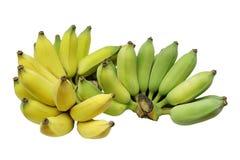 Gecultiveerde banaan of Thaise die banaan op witte achtergrond wordt geïsoleerd Royalty-vrije Stock Foto's