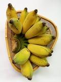 Gecultiveerde bananen Royalty-vrije Stock Afbeelding