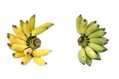 Gecultiveerde bananen of Thaise bananen Royalty-vrije Stock Foto's