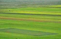 Gecultiveerde en bloemrijke gebieden van Castelluccio Di Norcia stock foto