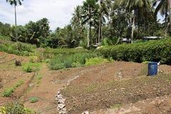 Gecultiveerde grond klaar voor het pplanting van bosbomen stock afbeeldingen