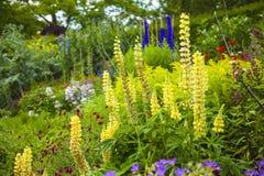 Gecultiveerde tuin met veel interessante installaties Royalty-vrije Stock Afbeeldingen