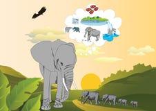 Gedächtnis eines Elefanten Stockbild