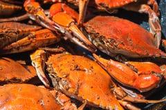 Gedämpfte blaue Krabben von der Chesapeakebucht Stockfotos