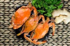 Gedämpfte Krabben mit Gewürzen Krabben-und Bier-Festival Maryland-blaue Befestigungsklammern stockbild