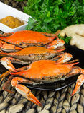 Gedämpfte Krabben mit Gewürzen Krabben-und Bier-Festival Maryland-blaue Befestigungsklammern lizenzfreie stockbilder