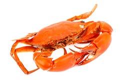 Gedämpfte schwarze Krabbe herein lokalisiert auf weißem backgrou Stockfotografie