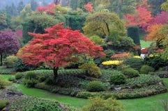 Gedaalde tuin in daling Royalty-vrije Stock Foto