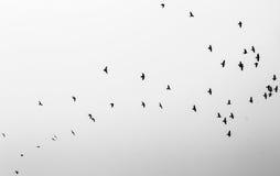 Gedachten die kunnen vliegen Stock Foto
