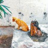 Gedanken einer goldenen Katze lizenzfreie stockfotografie