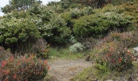 Gede Mountain Garden stockfotografie