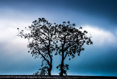 Gedeelde liefde van twee bomen Royalty-vrije Stock Fotografie