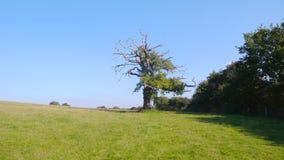 Gedeeltelijk skeletachtige boom omhoog de helling royalty-vrije stock afbeeldingen