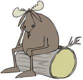 Gedeprimeerde stierenamerikaanse elanden Stock Afbeeldingen