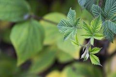 Gedetailleerd beeld op de groene boombladeren Royalty-vrije Stock Foto's