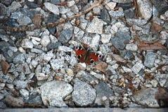 Gedetailleerd beeld van de Bruine vlinder op de stenen royalty-vrije stock foto