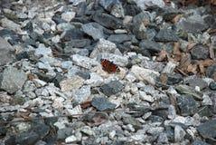 Gedetailleerd beeld van de Bruine vlinder op de stenen royalty-vrije stock afbeelding