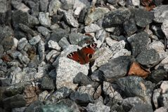 Gedetailleerd beeld van de Bruine vlinder op de stenen royalty-vrije stock foto's