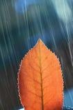 Gedetailleerd Blad in regen stock afbeelding