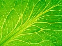 Gedetailleerd blad van salade royalty-vrije stock afbeeldingen